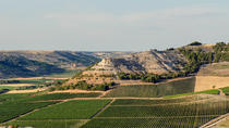 Winery Tour and tasting in Valladolid, Castile and León, Wine Tasting & Winery Tours