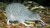 Overnight Kiwi Spotting Tour on Kapiti Island, North Island, Overnight Tours