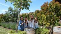 Napa Valley Wineries Tour, Napa og Sonoma