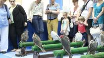 Abu Dhabi Falcon Hospital: 2-Hour Tour, Dubai, null