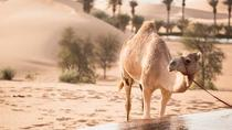 Live a day in Bedouin style - UAE Heritage Tour, Abu Dhabi, Bus & Minivan Tours