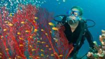 PADI Open Water Scuba Diving Course in Bayahibe, La Romana, Scuba Diving