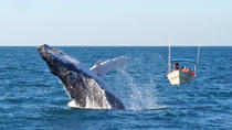 Whale Watching Expedition in Mazatlan, Mazatlan