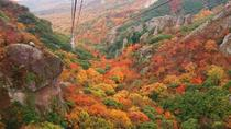 Autumn Leaves Experience in Shodoshima Island from Osaka including Kankakei Ropeway and Buffet ...