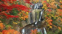 Autumnal Fukuroda Falls and Ashikaga Flower Park Illumination from Tokyo, Tokyo, Day Trips