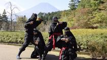 Day Trip to Fuji Airways and the Oshino Ninja Village including the Fuji Flower Village, Tokyo, Day ...