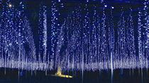 Day Trip to Harada Strawberry Farm and Ashikaga Flower Park Illumination Show, Tokyo, Day Trips