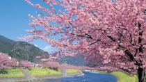 Day Trip to the Kawazu-zakura Cherry Blossom Festival from Tokyo, Tokyo, Full-day Tours