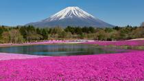 Fuji Shibazakura Festival 1-day Bus Tour from Nagoya, Nagoya, Multi-day Tours