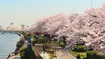 Full-Day Cherry Blossom Tour in Tokyo including Buffet Lunch, Tokyo, Full-day Tours