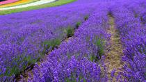 Full-Day Furano Lavender Farm and Blue Pond from Sapporo, 札幌