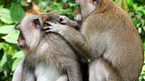 Private Tour: Ubud Highlights with Sacred Monkey Forest Sanctuary, Ubud, Private Sightseeing Tours