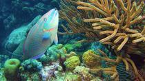 Admission to Bonaire National Marine Park, Kralendijk, Attraction Tickets