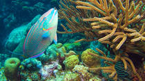 Bonaire Shore Excursion: National Marine Park Sail and Snorkel Tour, Kralendijk, Ports of Call Tours