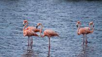 Lac Bay National Park Sightseeing Tour, Bonaire, Half-day Tours