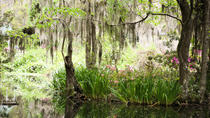 Private Budding Photographer Tour from Charleston, Charleston, Photography Tours