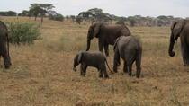 6 Days Camping Safari: Lake Manyara Serengeti Ngorongoro Cater and Tarangire National Park from...