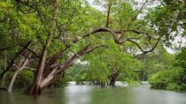 Tamarindo Kayak Estuary Mangrove Tour, Tamarindo, Kayaking & Canoeing