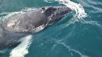 Samaná Whale Watching Excursion and Cayo Levantado Adventure from Punta Cana, Punta Cana, ...