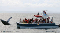 Samaná Whale Watching Excursion from Punta Cana , Punta Cana, Dolphin & Whale Watching