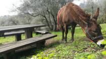 Donkey Trekking at Sunset in Portofino Park, Portofino, Horseback Riding