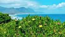 Whale Watching and Wine Tour to Hermanus, Cape Town, Dolphin & Whale Watching