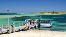 Penguin Island and Caversham Wildlife Park Day Trip From Perth, Perth, Day Trips