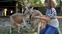 Pinnacles and Swan Valley Day Trip from Perth Including Caversham Wildlife Park, Vineyard Lunch,...