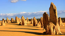 Pinnacles and Yanchep National Park Day Trip from Perth Including Lobster Shack Lunch and ...