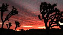 Sunset Joshua Tree Hike with Dinner and Night Sky Presentation, Palm Springs, Hiking & Camping