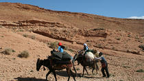 A Itinerant Hiking Stay of 7 Days with Accommodation among Nomads and Transport