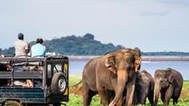 All Inclusive Minneriya Elephant Safari, Sigiriya & Dambulla Day Trip from Kandy, Kandy, Day Trips