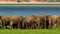 All Inclusive Minneriya Elephant Safari wth Sigiriya Lion Rock from Colombo, Colombo, Day Trips