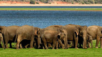 All Inclusive MinneriyaElephant Safari wth Sigiriya & Dambulla Cave Temples Tour, Negombo, Day Trips