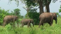 Udawalawe Safari with visits to Devundara Temple and Stilt Fishing Private Oneday Tour, Galle, Day ...