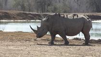 Full-Day Hlane Royal National Park Safari from Manzini, Swaziland, Safaris