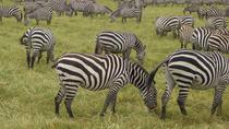 2-Night Masai Mara Safari from Mombasa, Mombasa, Overnight Tours