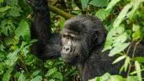 3 Day 2 Night Bwindi Gorillas Trek, Kampala, Multi-day Tours