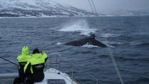 Whale Watching on a Catamaran from Tromso, Tromso, Dolphin & Whale Watching
