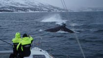 Whale Watching on a Catamaran in Tromso, Tromso