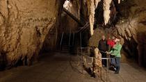 Tauranga Shore Excursion: Waitomo Caves and The Kiwi House, Tauranga, Ports of Call Tours
