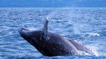 Punta Cana Day Trip: Samana Whale Watching including Limon Waterfall, Punta Cana, Dolphin & Whale ...
