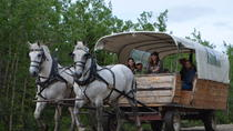 Draft Horse Drawn Covered Wagon Ride with Back Country Dining, Denali National Park, Air Tours