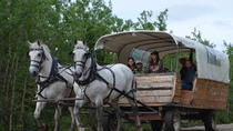 Horse-Drawn Covered Wagon Ride with Backcountry Dining, Denali National Park