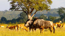 Full Day Safari Tour of Ngorongoro Crater, Arusha, Cultural Tours