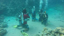 PADI Course: Padi Open Water Diver Course, Sharm el Sheikh, Scuba Diving