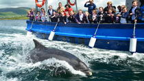Tour in barca di avvistamento dei delfini a Dingle, Dingle, Dolphin & Whale Watching
