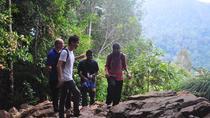 2-Day Taman Negara National Park Adventure and Kuala Gandah Elephant Sanctuary Tour, Kuala Lumpur,...