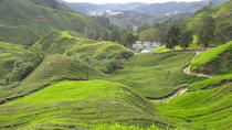 Full Day Cameron Highlands Tour, Kuala Lumpur, Day Trips