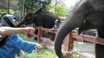 Kuala Gandah Elephant Sanctuary Tour from Kuala Lumpur, Kuala Lumpur, Day Trips